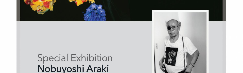 16th Jan to 5th Feb - Araki
