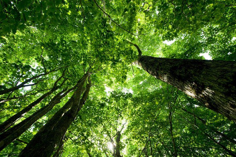 Niseko trees
