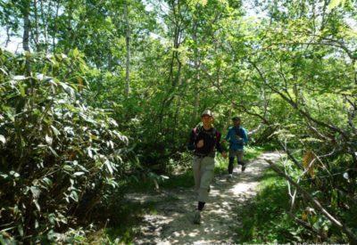 Npb Trail Run